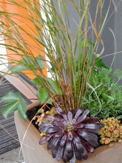 Variegated easy care plants