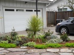 Drought tolerant and curb appeal