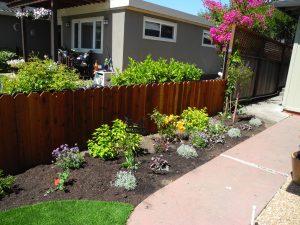 Friendly Planting Between Neighbors